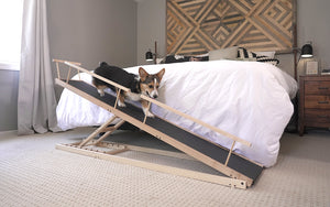 Corgi on the bed ramp