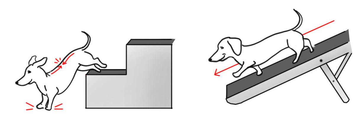 stairs versus ramp for dog safety