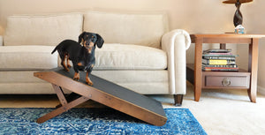 Couch ramp for dogs