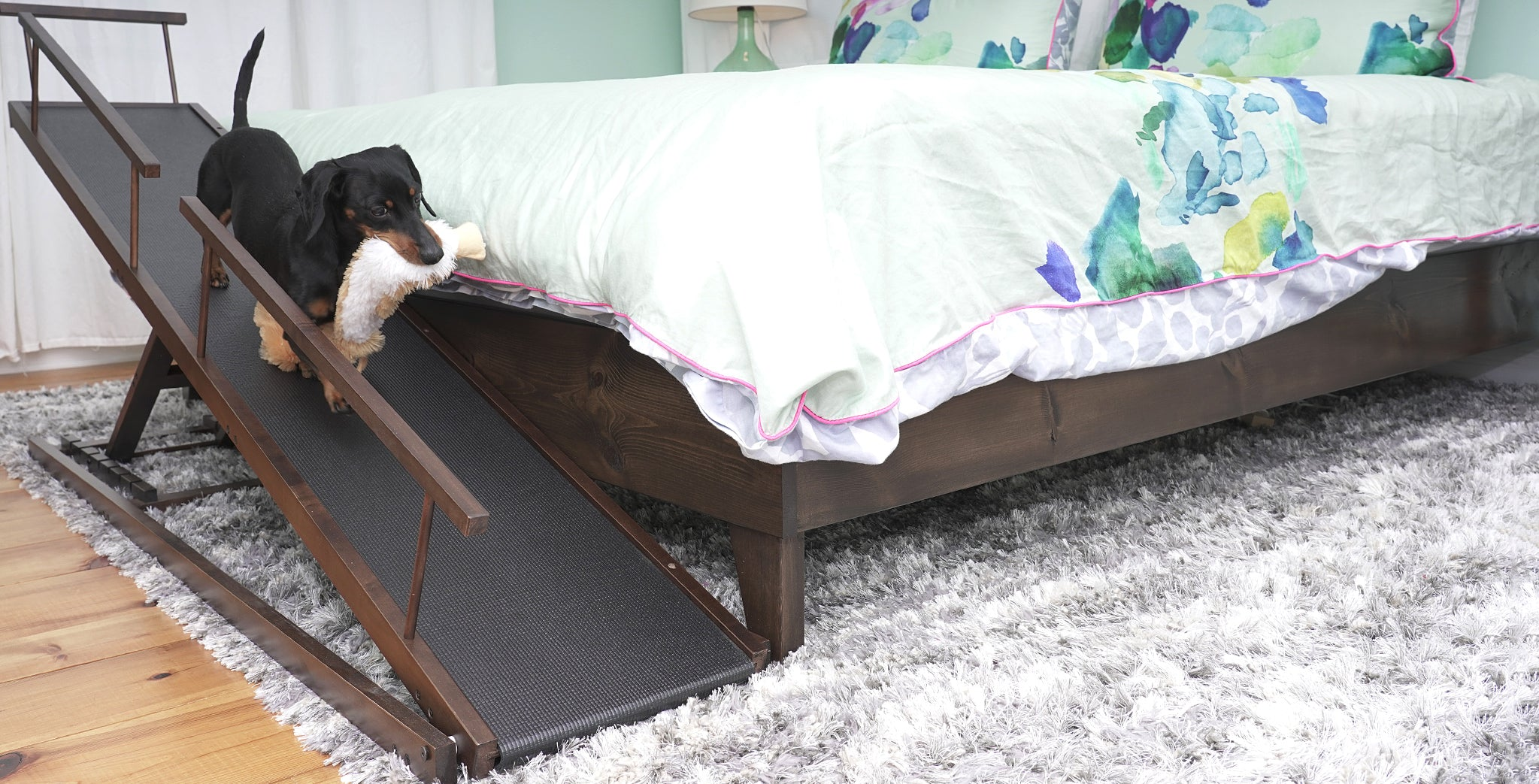 Dachshund going down bed ramp