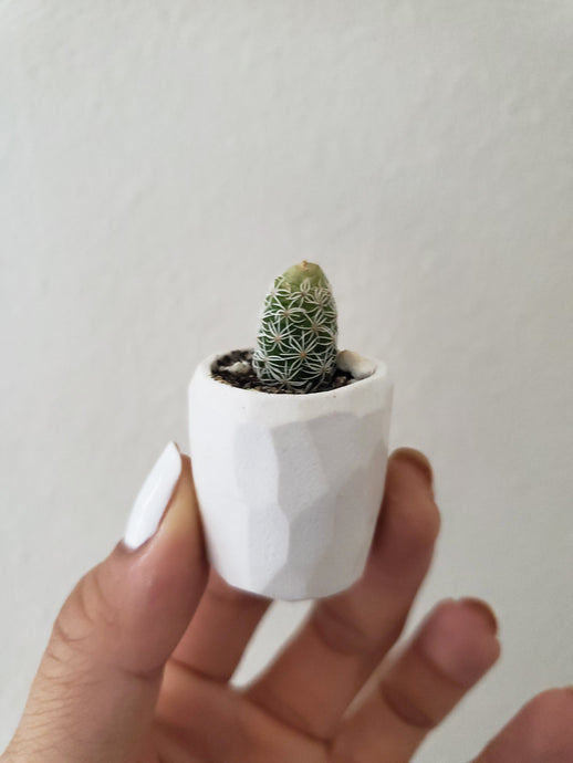 Mini Cactus Kit - White