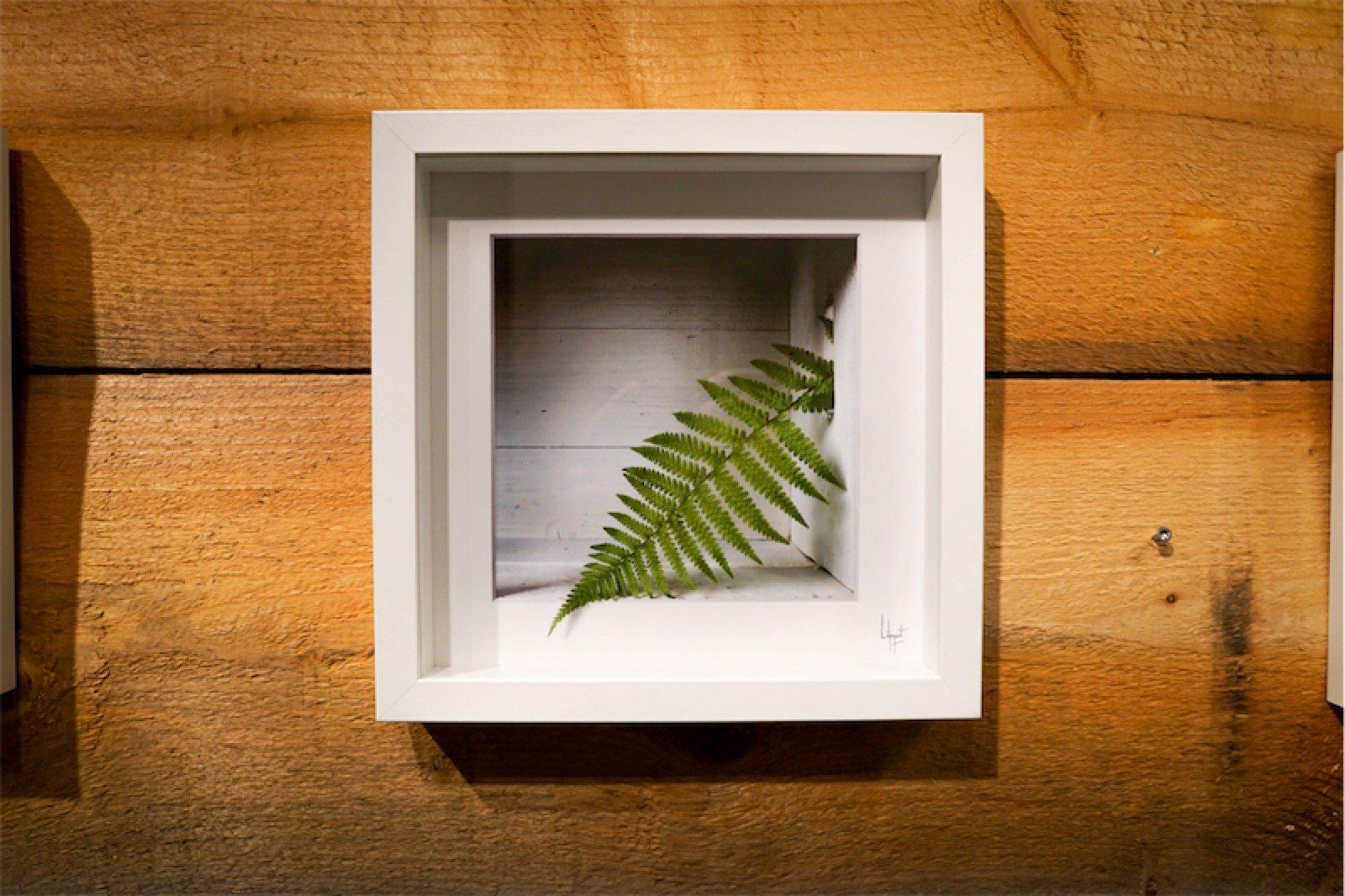 """Fern"" - Illusionsfoto"