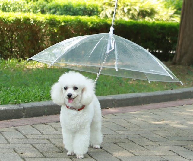 Novel Umbrella of Dogs to walk them in rainy times