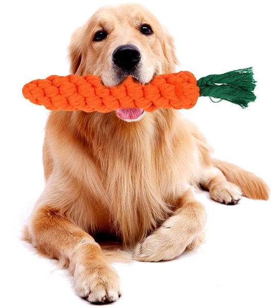 Dog with Carrot Chew Toy