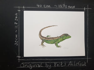 Original Sand Lizard watercolor