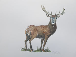 Original Red deer watercolor