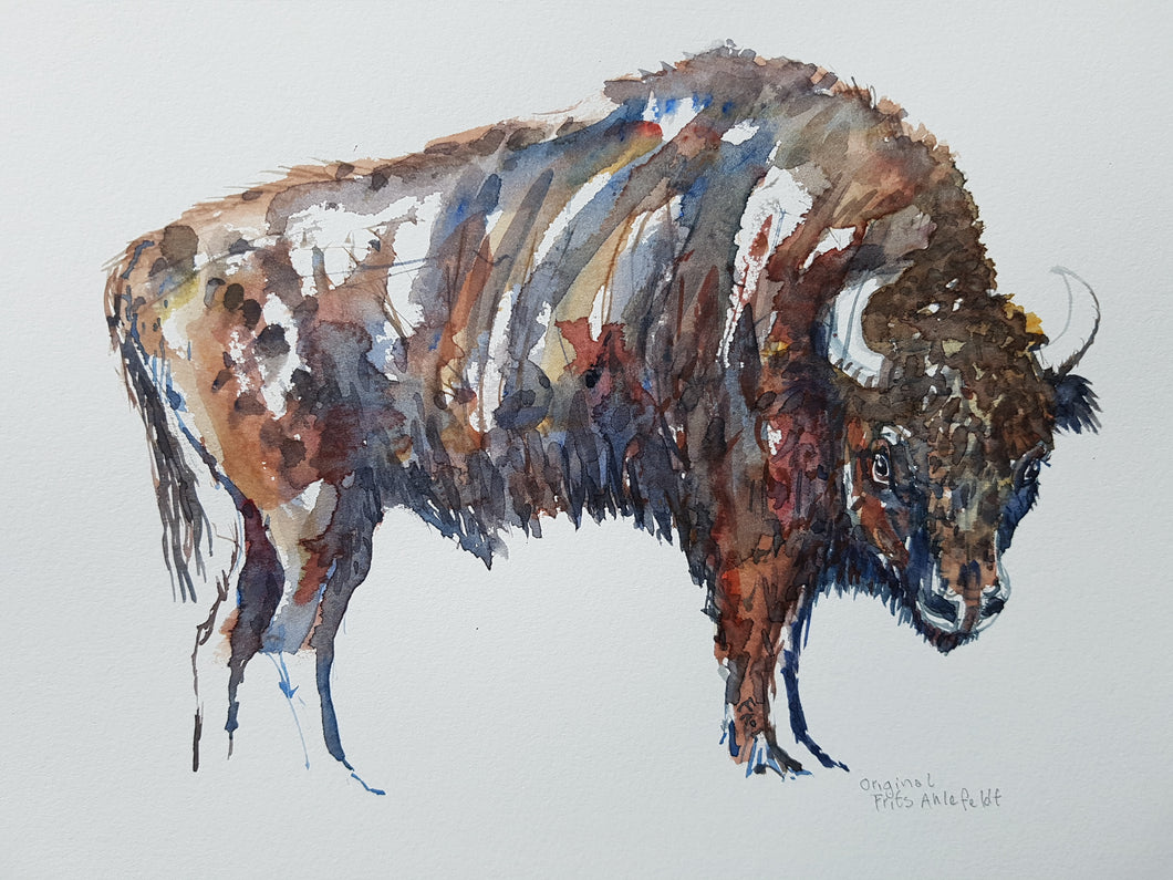 Original European Bison watercolor