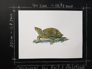Original Red Eared Slider Turtle watercolor