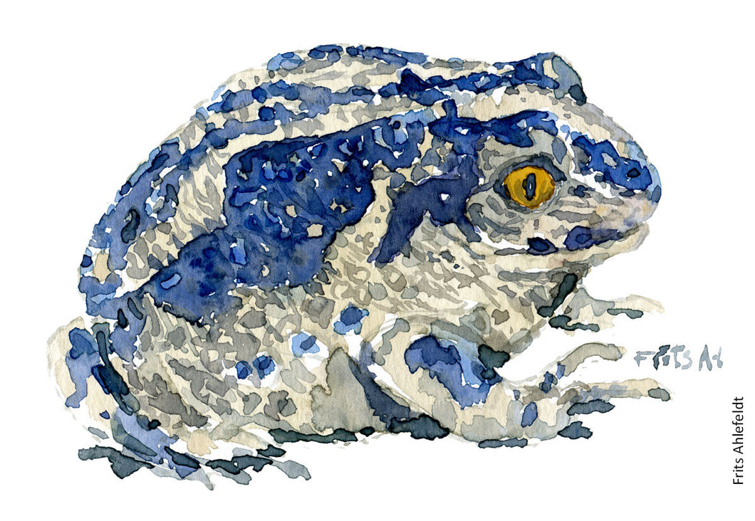 Common Spade foot toad bluish -watercolor by Frits Ahlefeldt