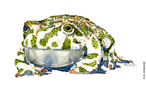 Download Green toad watercolor