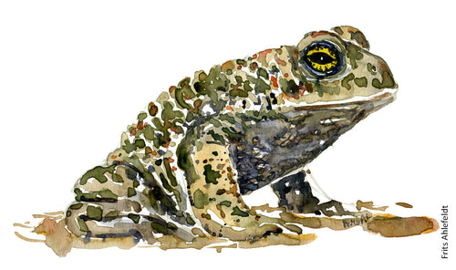 Download Natterjack toad watercolor