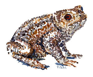 Common Toad watercolor by Frits Ahlefeldt