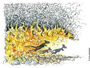 Kangaroos jumping out of wildfire. Climate change illustration. Frits Ahlefeldt