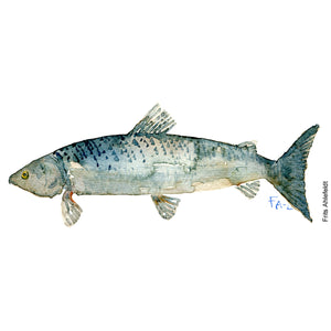 Dw00055 Download fish sketch grey watercolor