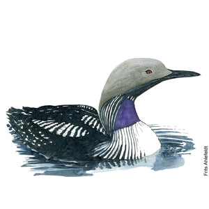 Dw00065 Download Arctic loon watercolor