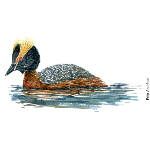 Dw00069 Download Horned grebe watercolor