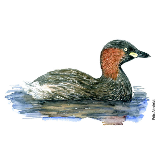 Dw00071 Download Little grebe bird watercolor