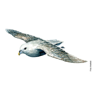Dw00072 Download Northern fulmar bird watercolor