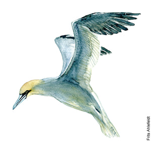 Dw00073 Download Northern gannet bird watercolor