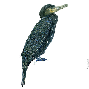 Dw00074 Download Great Cormorant bird watercolor