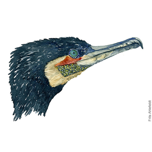 Dw00075 Download Great cormorant bird head watercolor
