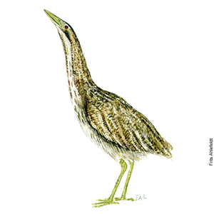 Dw00077 Download Eurasian bittern bird watercolor