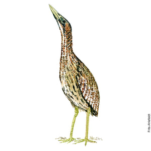 Dw00078 Download Eurasian bittern bird 2 watercolor