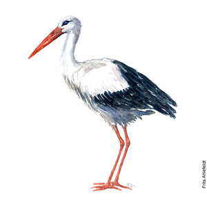 Dw00082 Download White stork bird watercolor