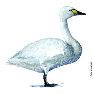 Dw00084 Download Tundra swan bird watercolor