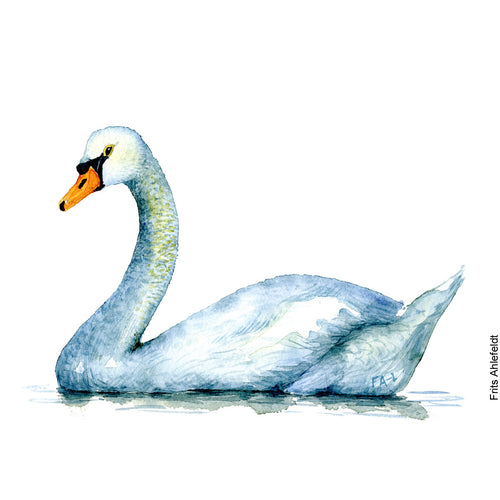 Dw00086 Download Mute Swan bird watercolor