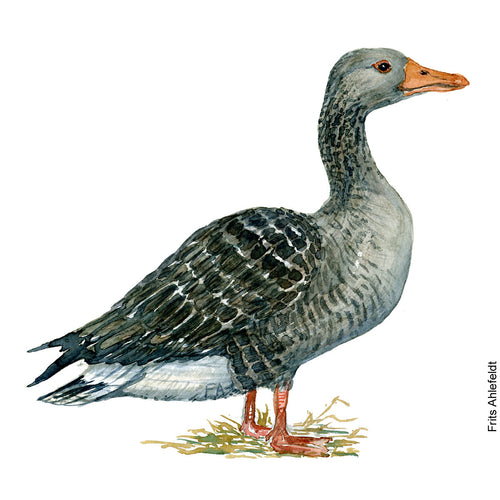Dw00091 Download Greylag goose bird watercolor