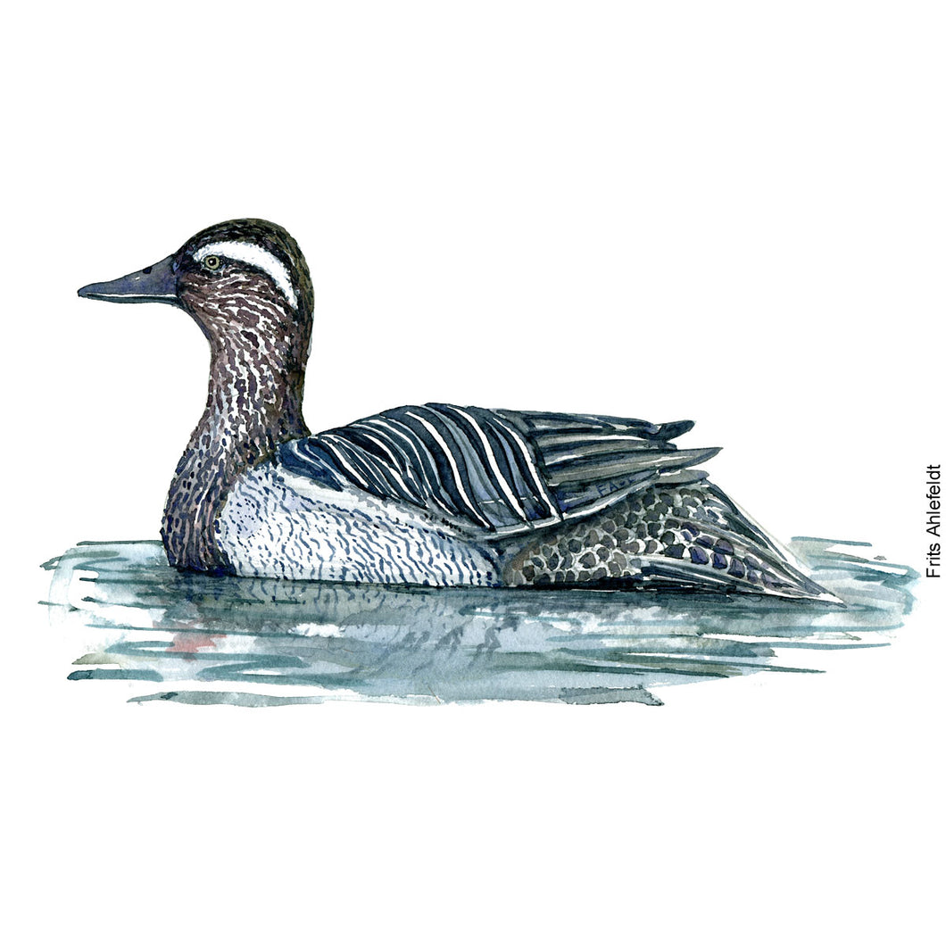 Dw00101 Download Garganey duck bird watercolor