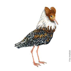 dw00102-Ruff-brown-watercolor