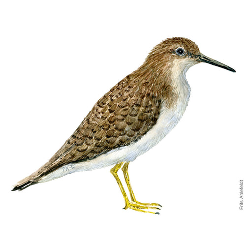 dw00109 Download Common sandpiper watercolor