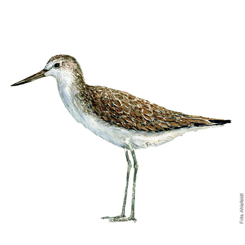 dw00110 Download Common greenshank watercolor
