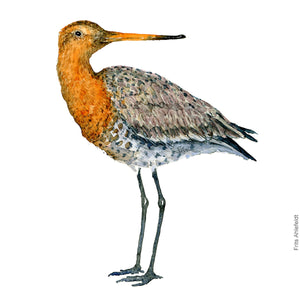 dw00112 Download Black tailed godwit watercolor