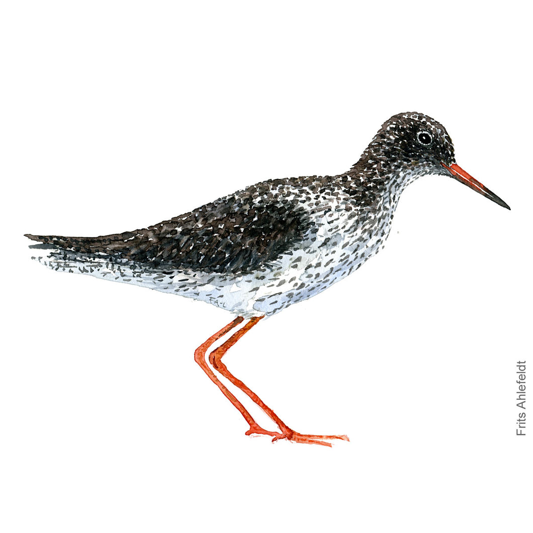 dw00113 Download Common redshank watercolor