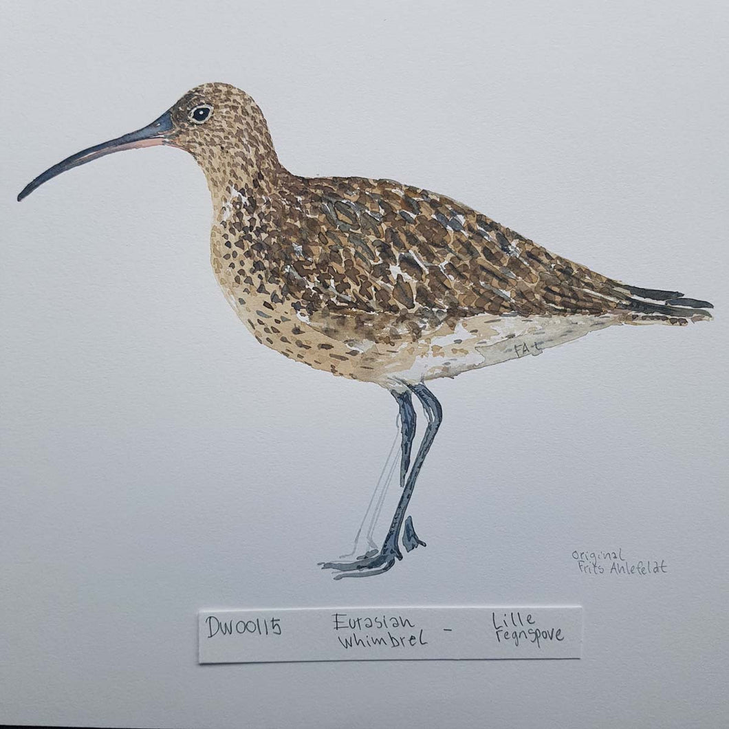 dw00115 Eurasian whimbrel Original watercolor