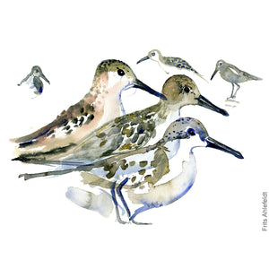 dw00119 Download dunlin group watercolor