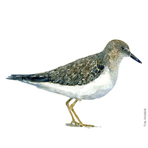 dw00120 Download Temminck's stint watercolor