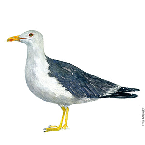 dw00134 Download Lesser black-backed gull watercolor