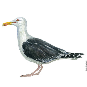 dw00135 Download Great black-backed gull watercolor
