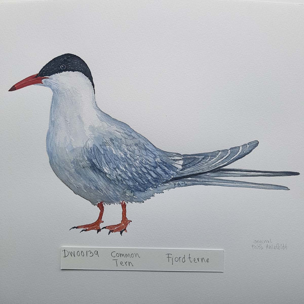 dw00139 Common tern Original watercolor