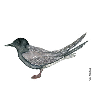 dw00142 Download Black tern watercolor