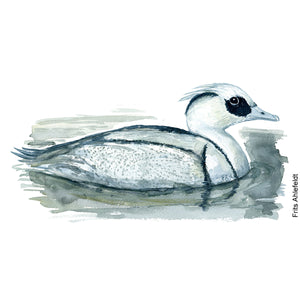 dw00157 Download Smew watercolor