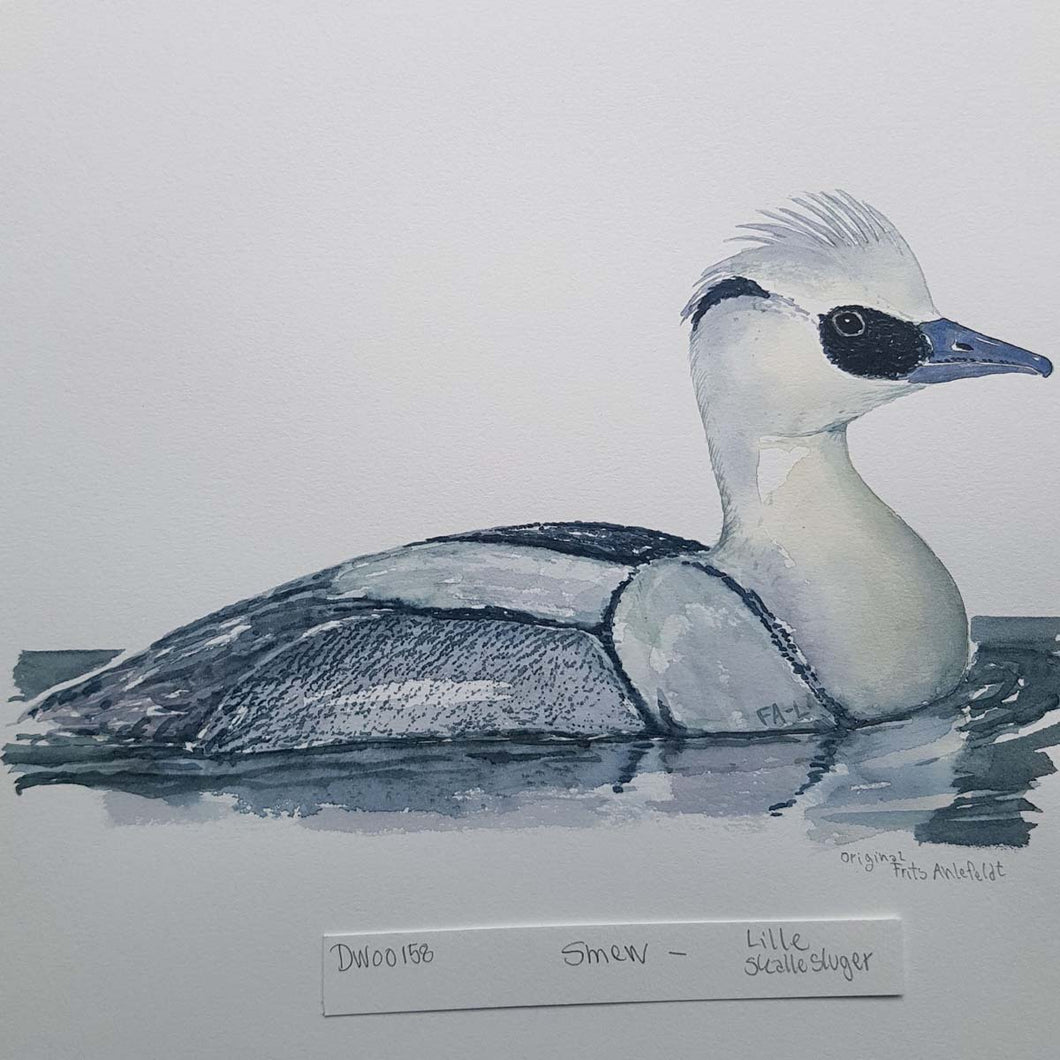 dw00158 Smew Original watercolor