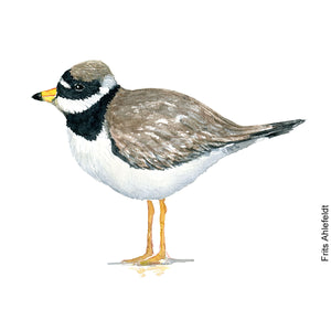 dw00164 Download Common ringed plover watercolor