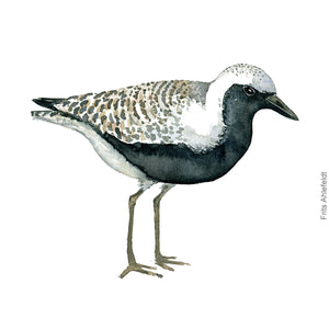 dw00169 Download Grey plover bird watercolor