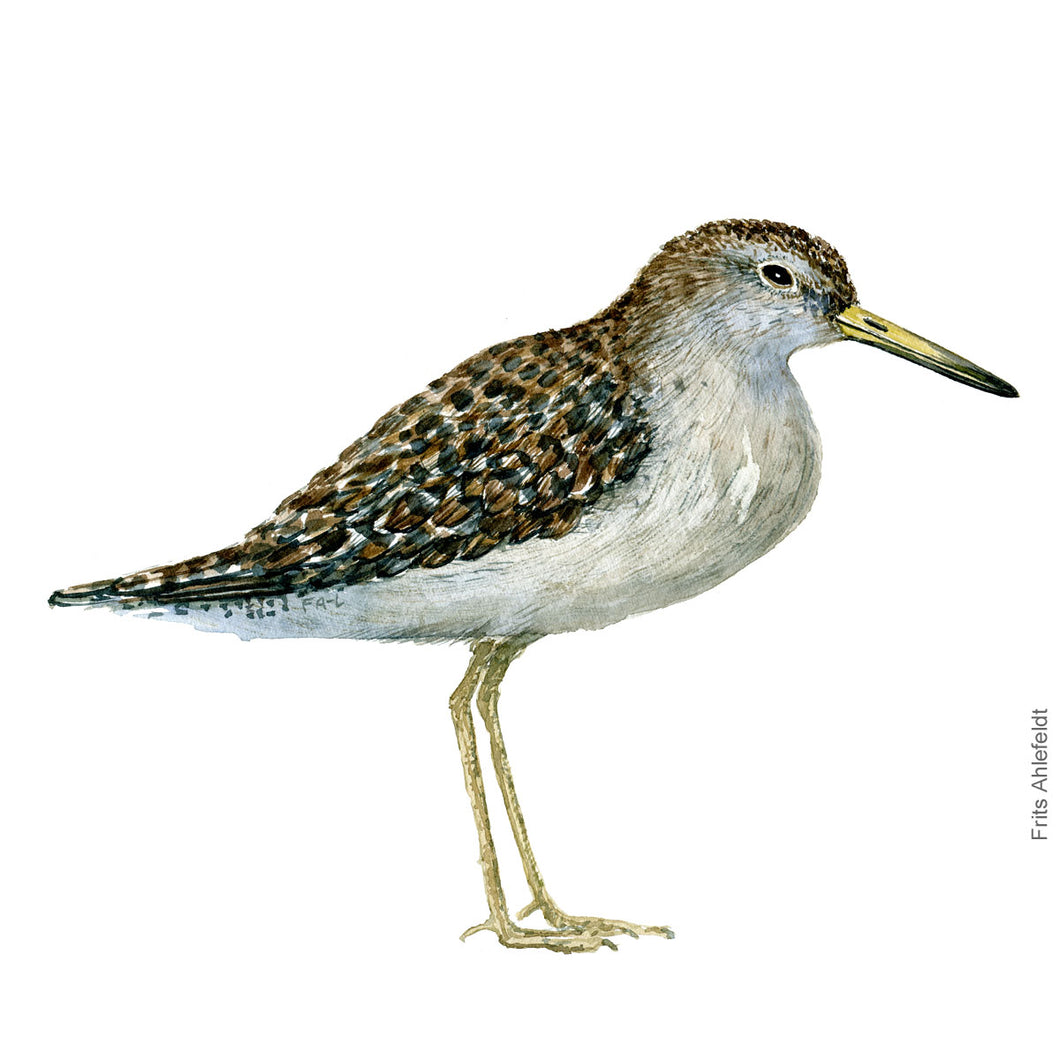 dw00180 Download Wood sandpiper watercolor