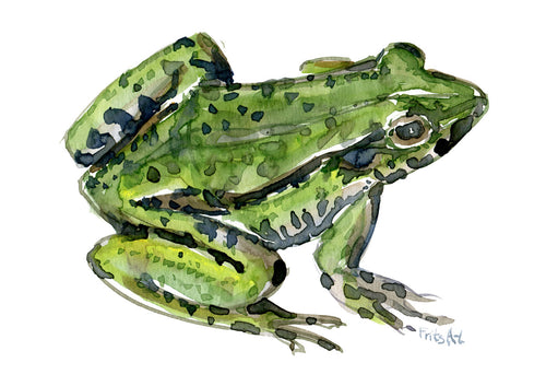 Download Edible frog 2 watercolor